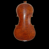 Violin wood rarely figured
