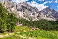 Paneveggio -Stradivari forest- Spruce
